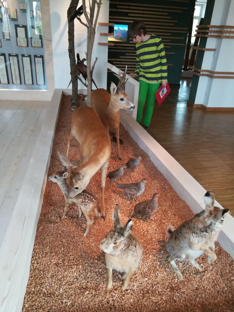 Familienurlaub im Bayerischen Wald, Zwiesel, Waldmuseum