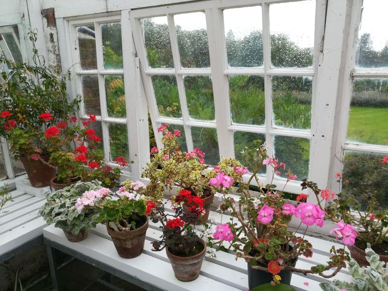 Inveresk Lodge Garden, Musselburgh, Gewächshaus