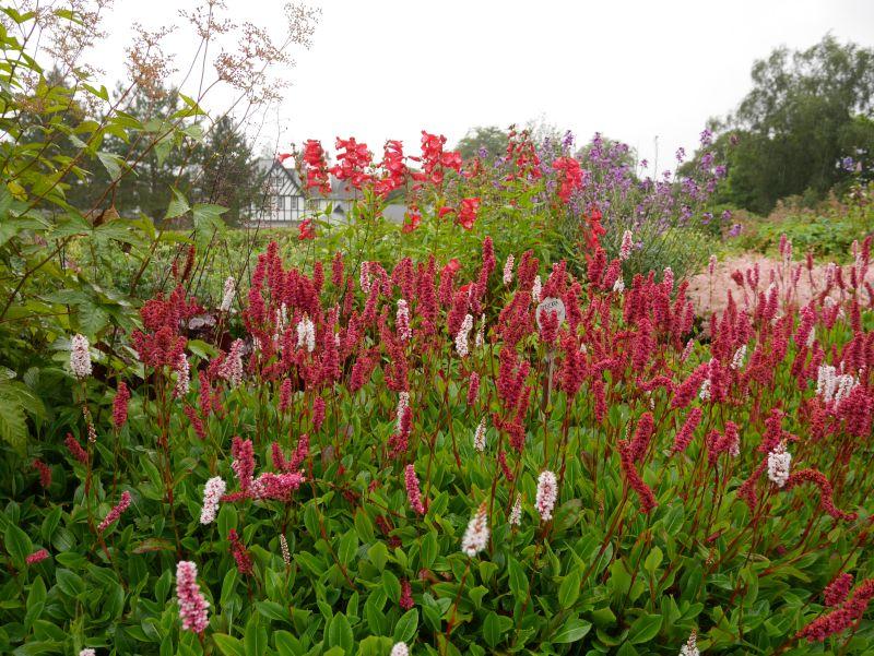 The Hill House Helensburgh, Garten