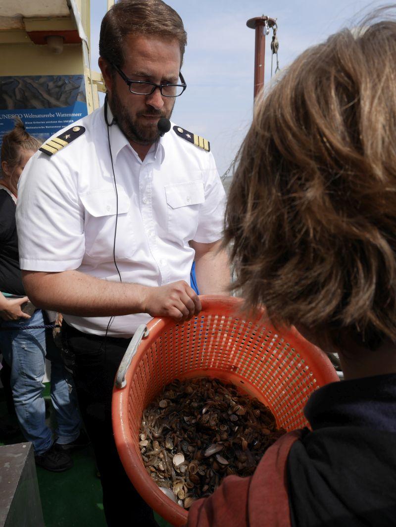 borkum bootsfahrt krabbenfischen fang