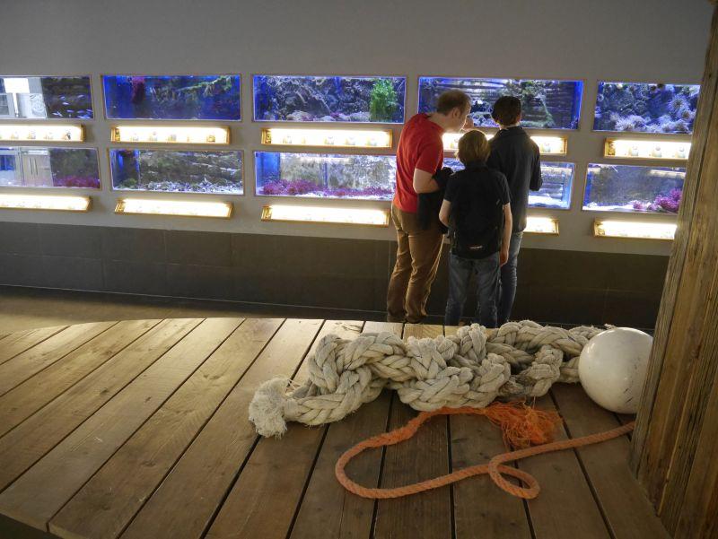 Nordsee-Aquarium Borkum mit Kindern