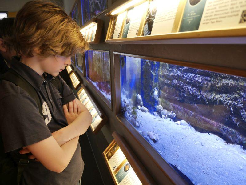 Borkum Sehenswürdigkeiten, Nordsee-Aquarium