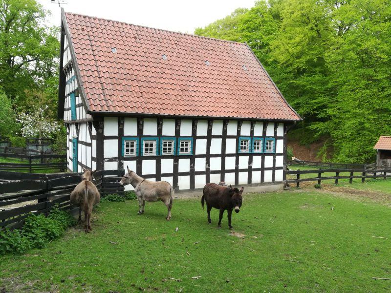 Bielefeld mit Kind, Tierpark Olderdissen, Esel
