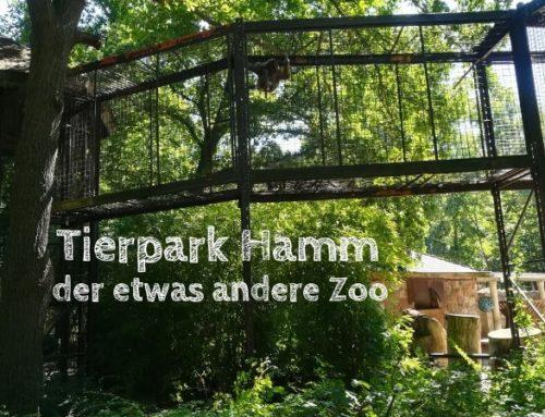 Tierpark Hamm: Tayras kennenlernen und Alpakas kuscheln