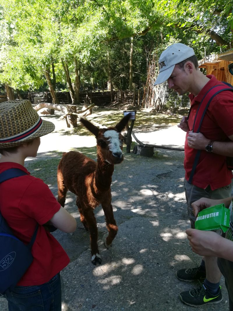 Tierpark Hamm, Alpakas füttern