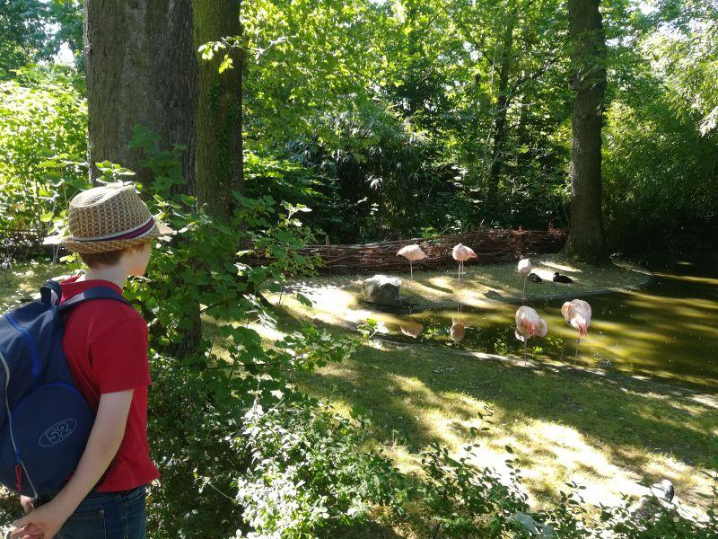 Tierpark Hamm, Flamingos