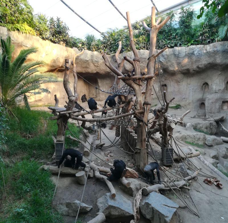 zoo leipzig, menschenaffenanlage