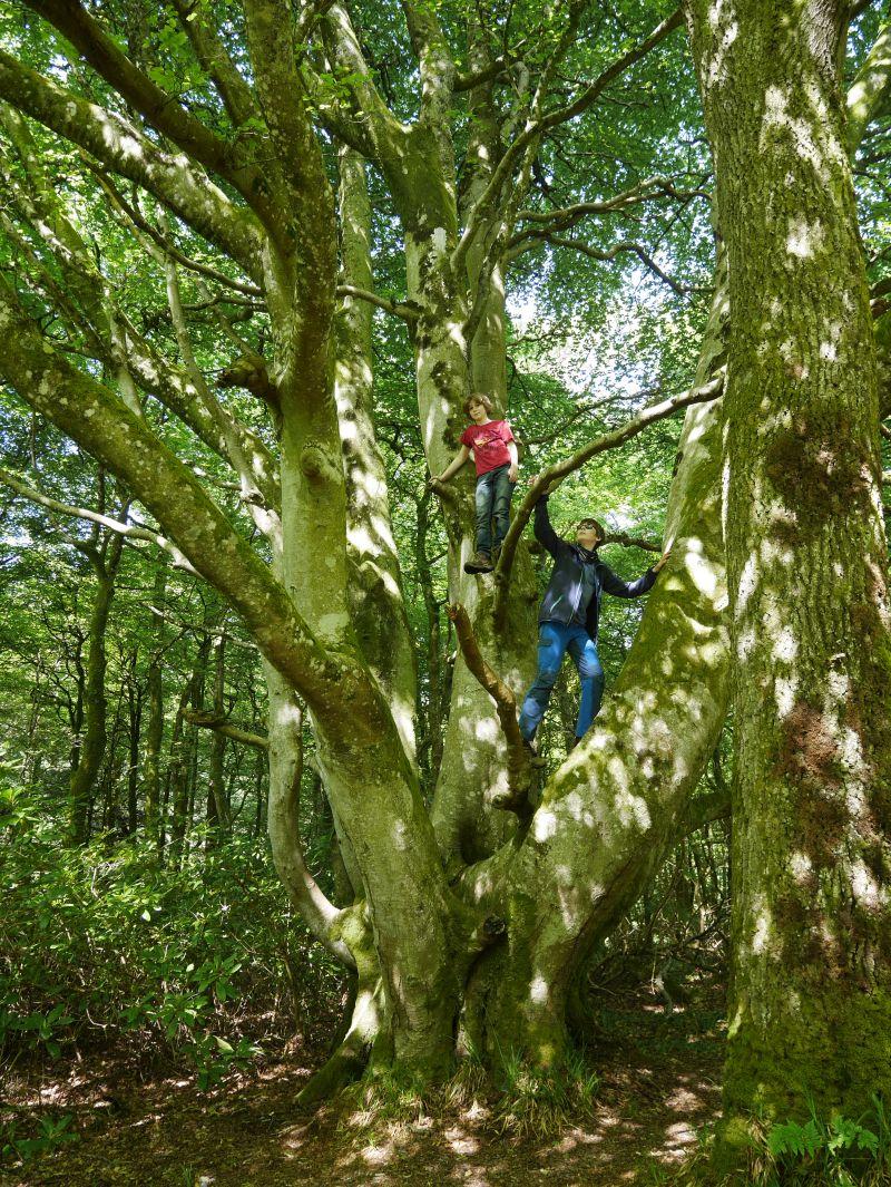 islay bridgend kletterbaum wandern mit kindern schottland