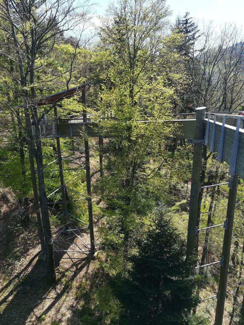 Baumkronenpfad Waldkirch, Schwarzwald