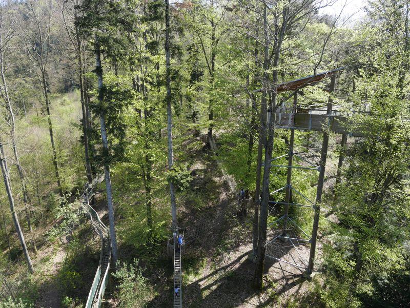 baumkronenpfad waldkirch von oben