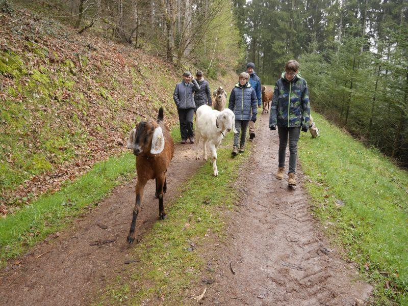 schwarzwald wandern mit ziegen und kindern