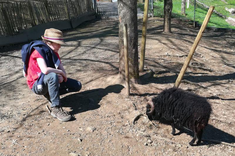Schwarzwaldzoo Waldkirch, Streichelzoo Kind mit Schaf