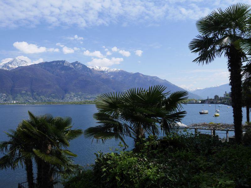 tessin lago maggiore vira palmen