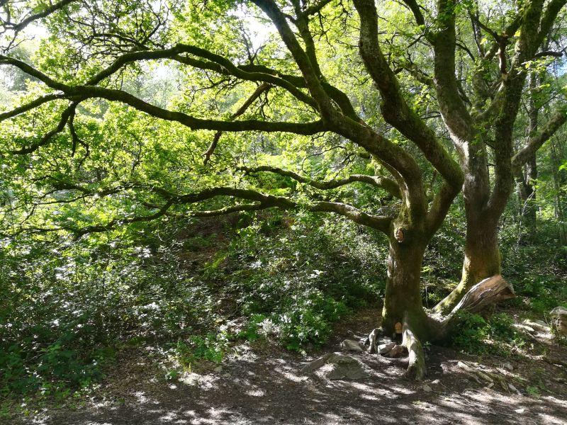 loch lomond aberfoyle feenhaus