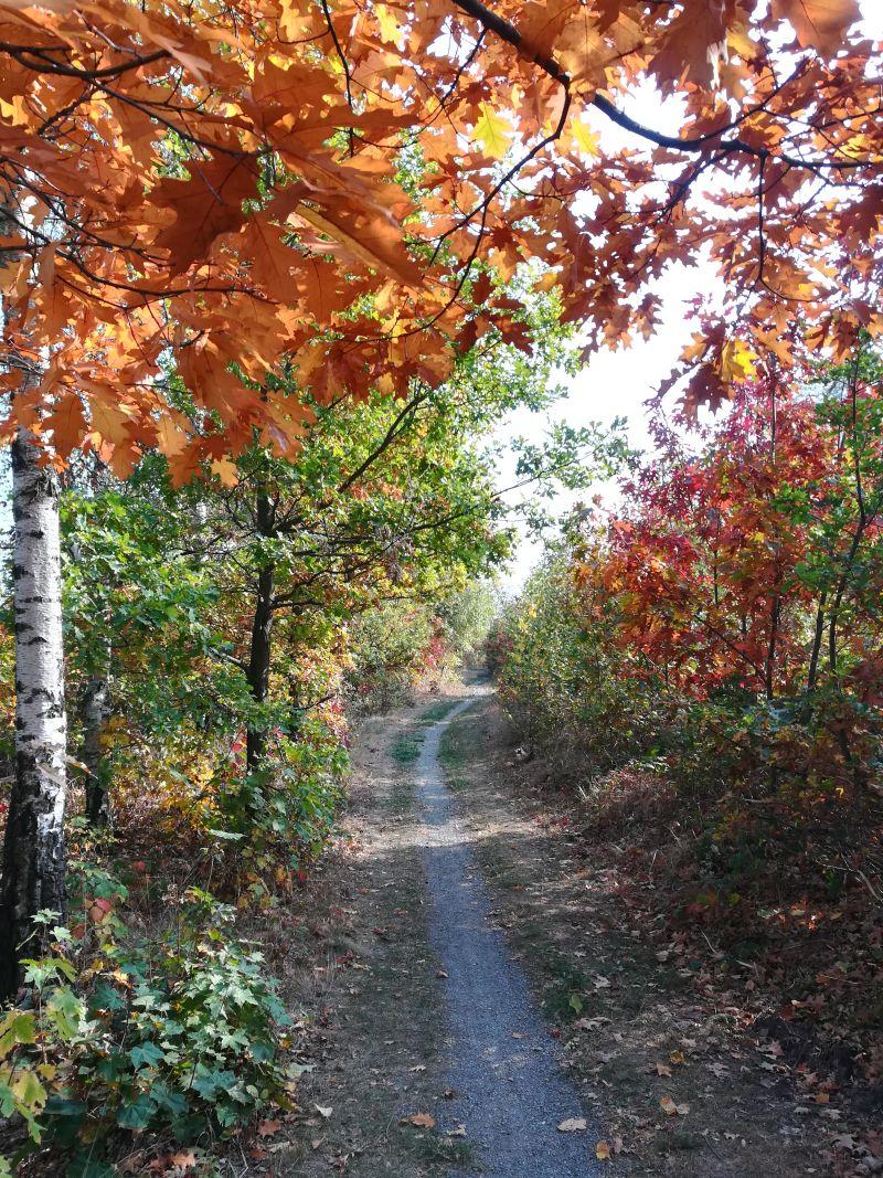 Vogtland Natur, urlaub in deutschland, geheimtipp