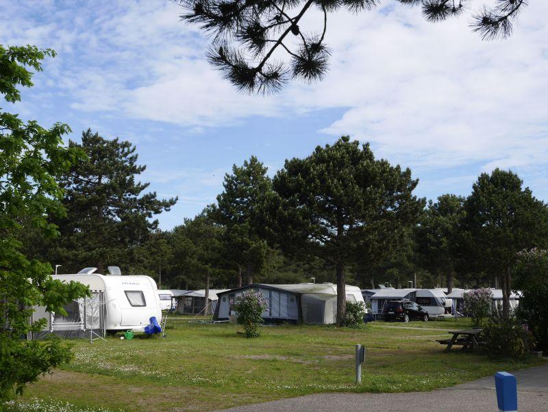 dänemark feddet camping