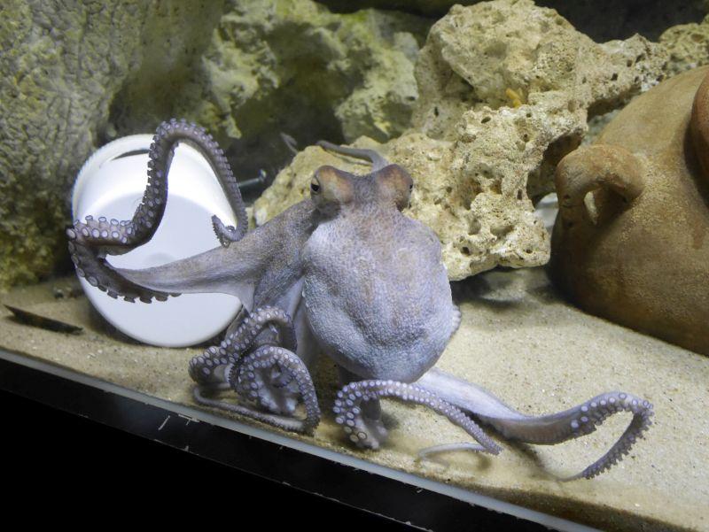 wilhelmshaven aquarium krake