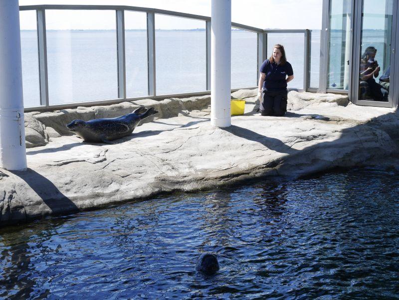 wilhelmshaven aquarium robbenfütterung