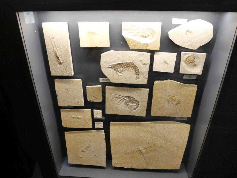wilhelmshaven aquarium urzeitmeermuseum fossilien