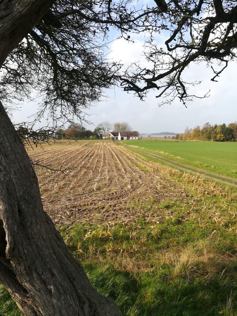 landschaft mön, dänemark