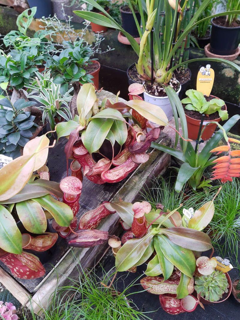 braunschweig cafe flora fleischfressende pflanzen