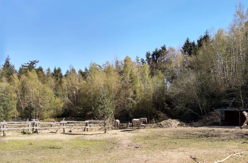 spazieren gehen in schaumburg liekwegen wildpferde