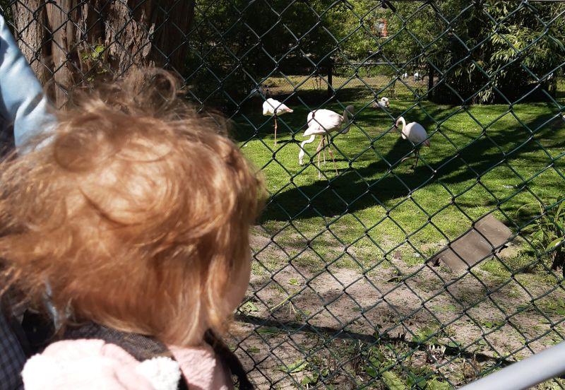 Baby vor Flamingos.