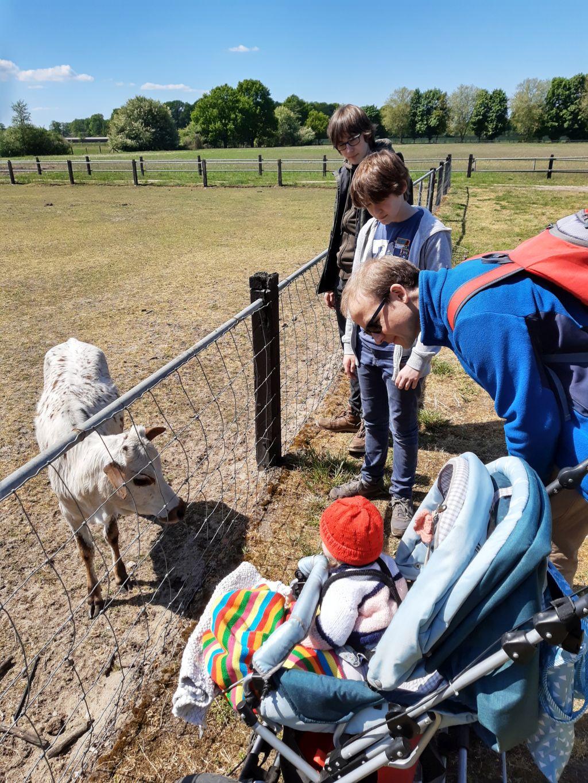 tierpark ströhen baby meets kälbchen