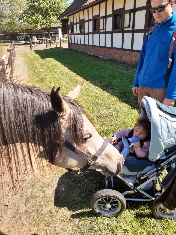 tierpark ströhen arabergestüt ismer pferd und baby
