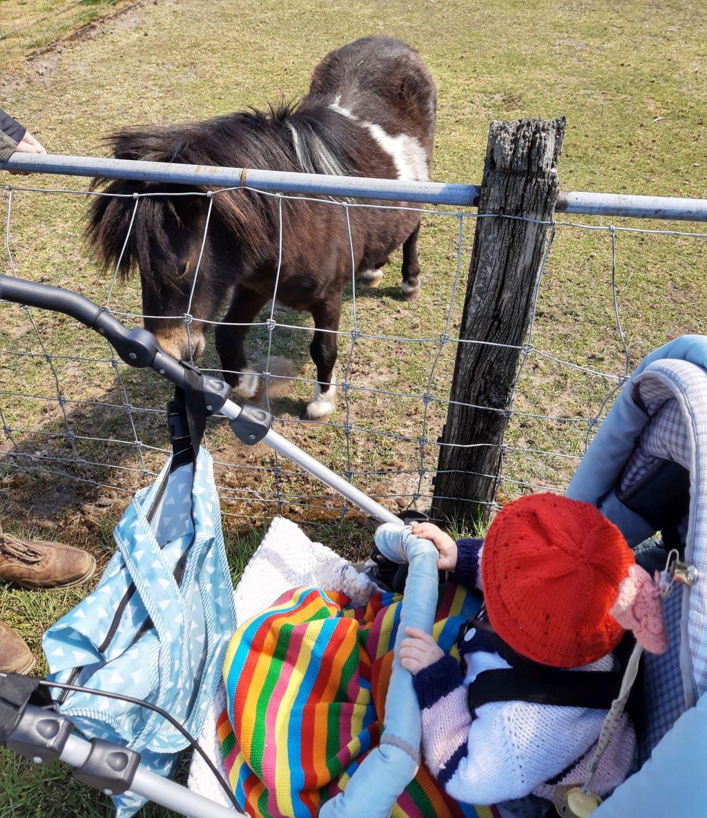 tierpark ströhen mit baby ponys