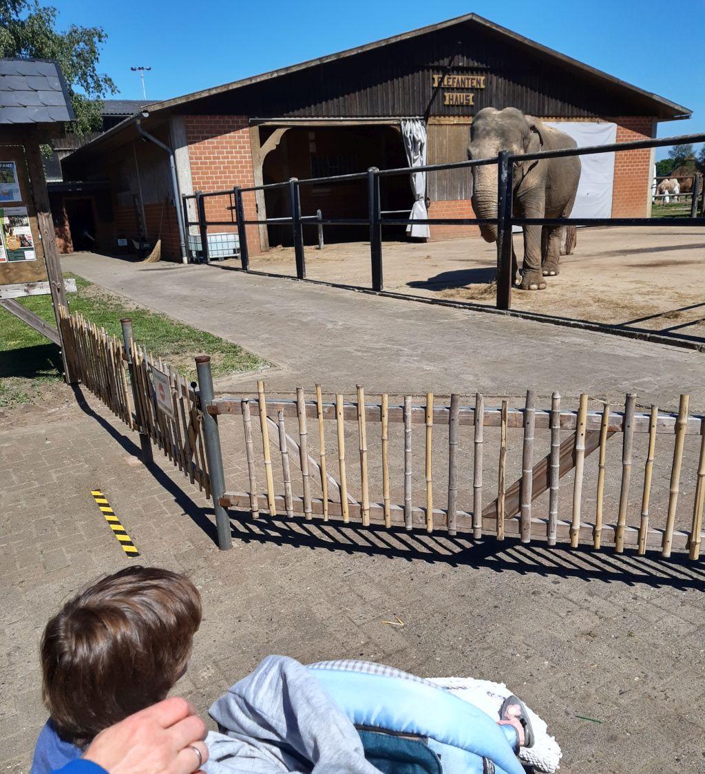 tierpark ströhen elefanten
