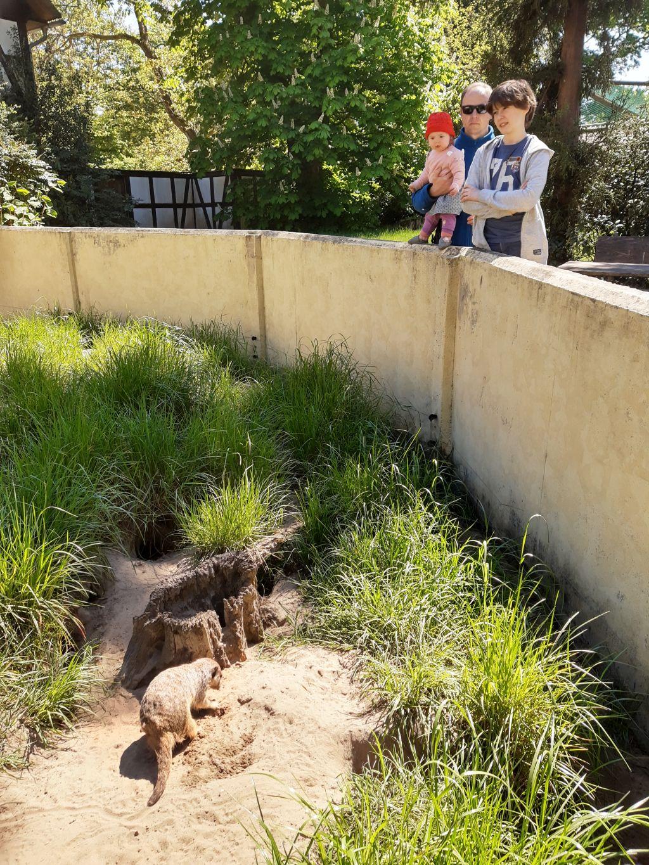 tierpark ströhen mit baby und kind erdmännchen
