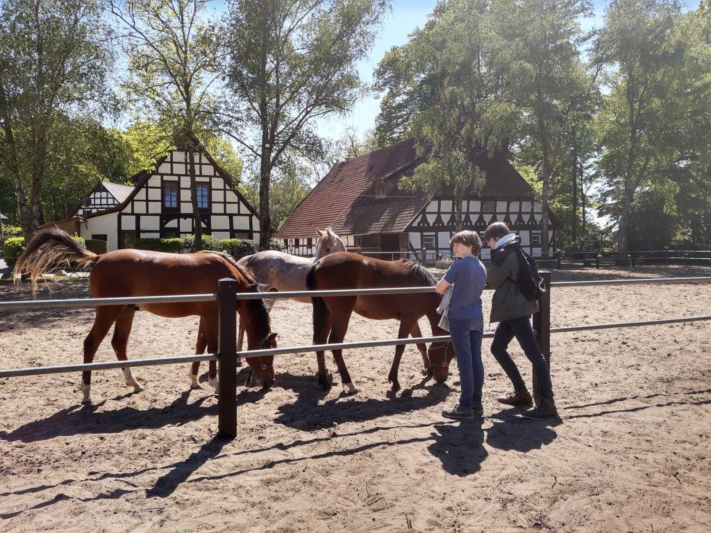 ströhen arabergestüt ismer pferde streicheln