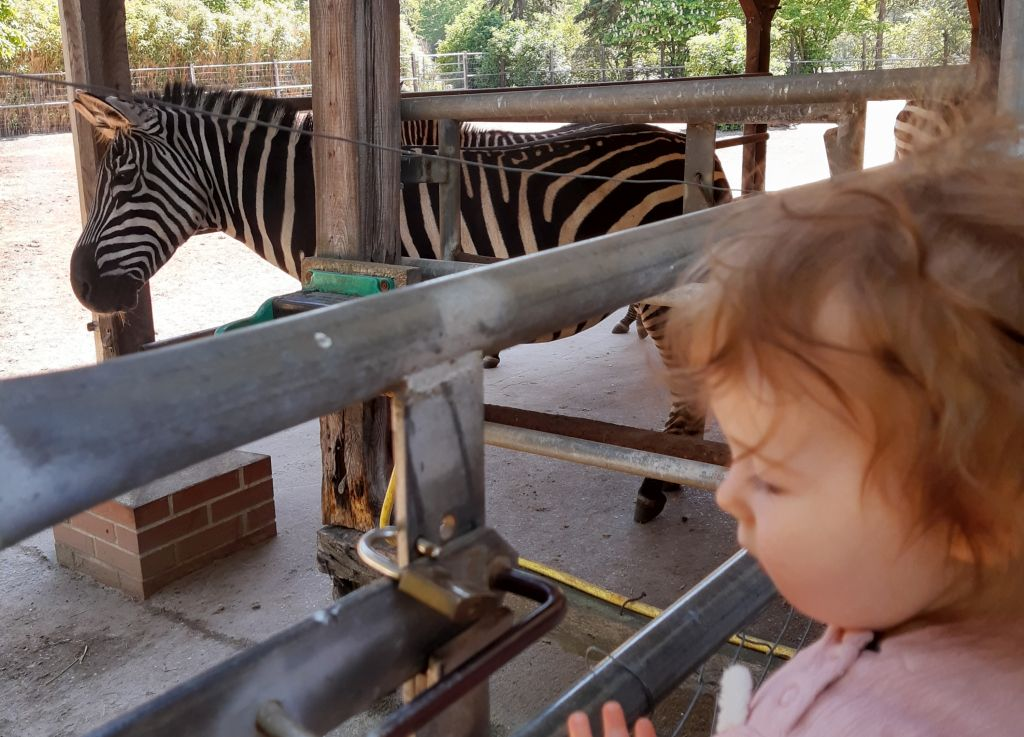 baby und zebra im tierpark ströhen