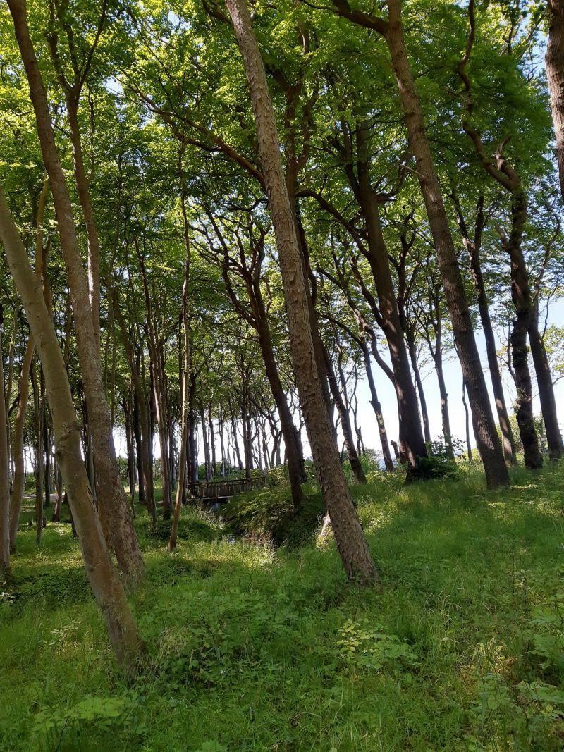 nienhagen ostsee gespensterwald