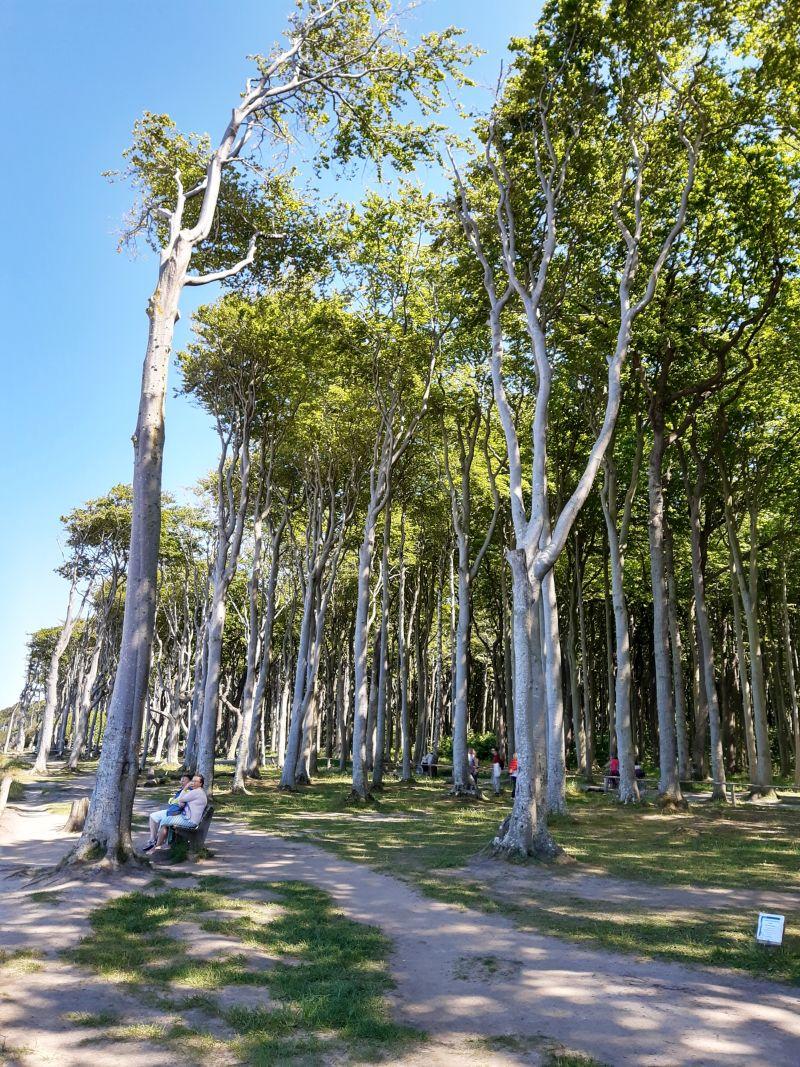 nienhagen gespensterwald 2020
