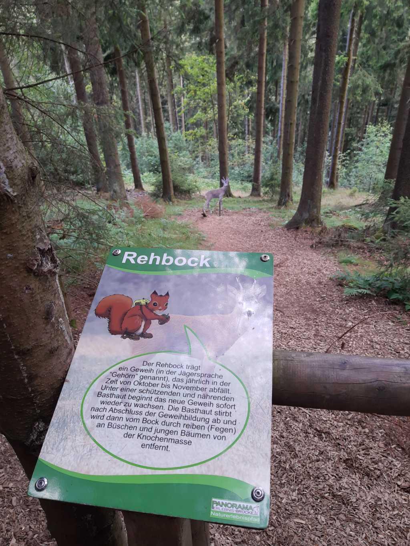 erlebnisberg kappe sauerland naturlehrpfad