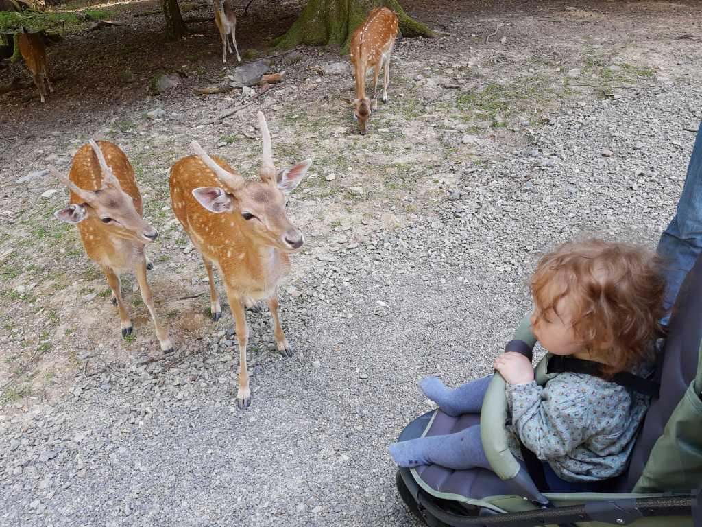 rhoen wildpark klaushof freigehege damwild