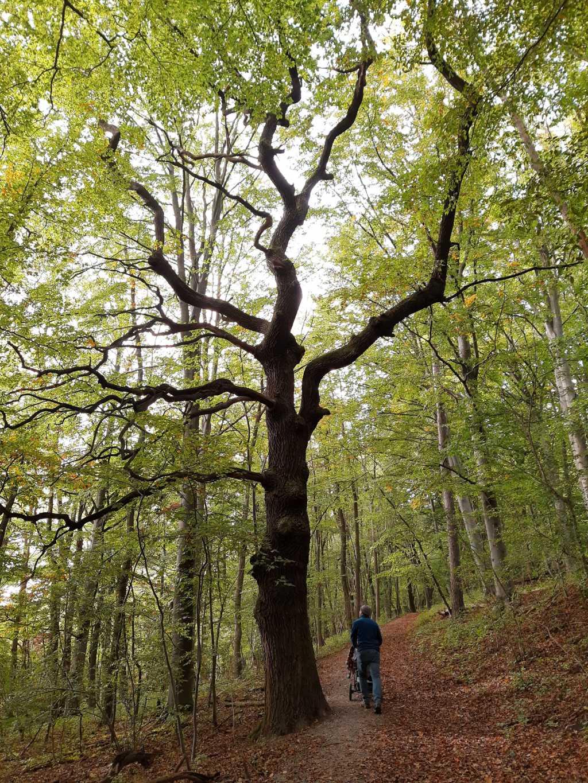 familienurlaub in thüringen nationalpark hainich