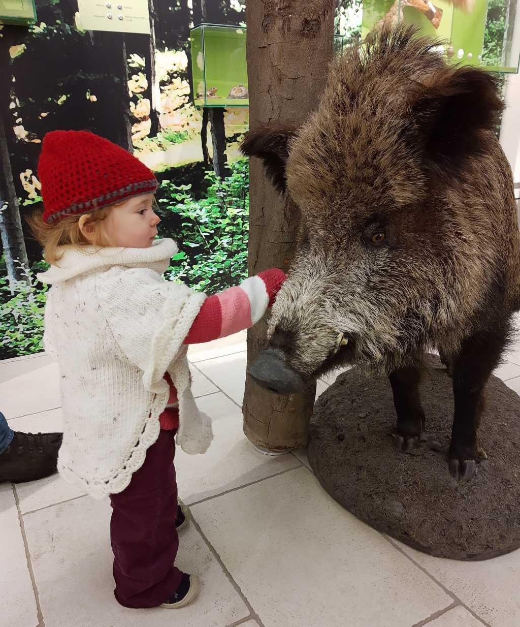 thueringen ilmenau kickelhahn waldmuseum wildschwein