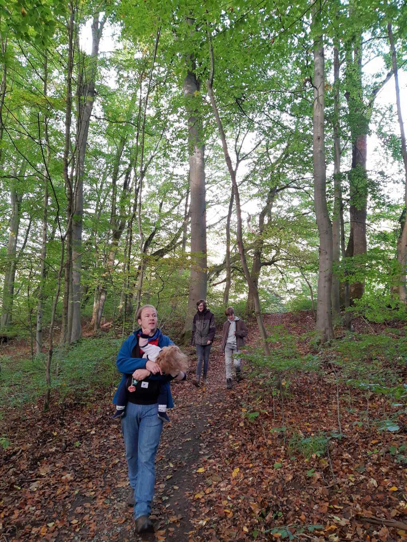 thüringen nationalpark hainich urwaldpfad mit kindern