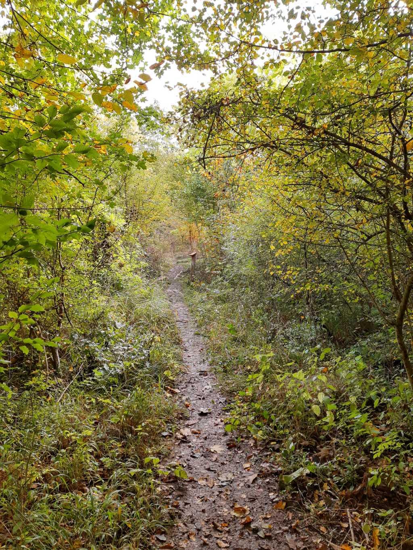 thüringen nationalpark hainich urwaldpfad