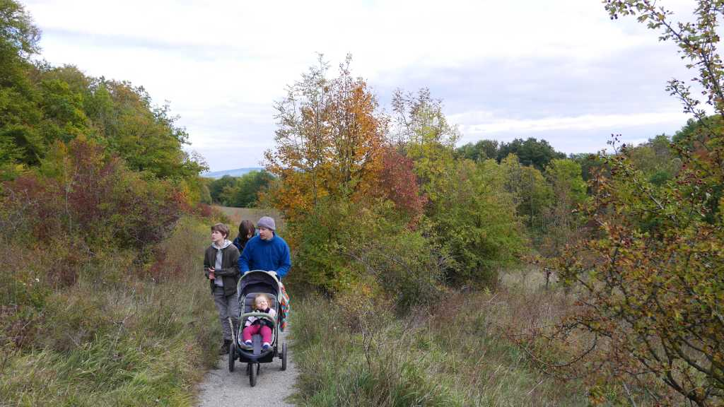 wandern mit kindern hainich wildkatzenschleichweg jungwald