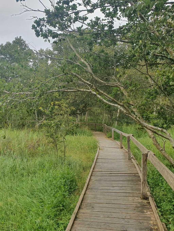 schwimmendes moor jadebusen wandern durchs moor