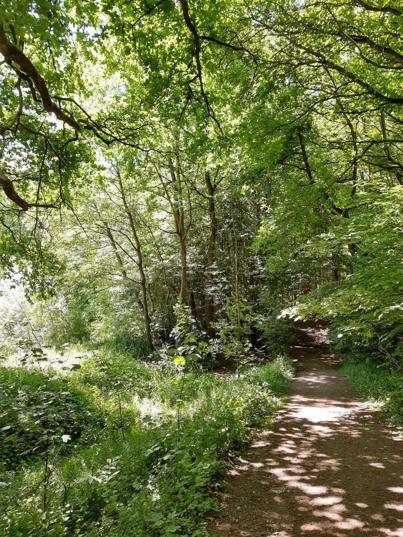 wandern in schaumburg stiftswald