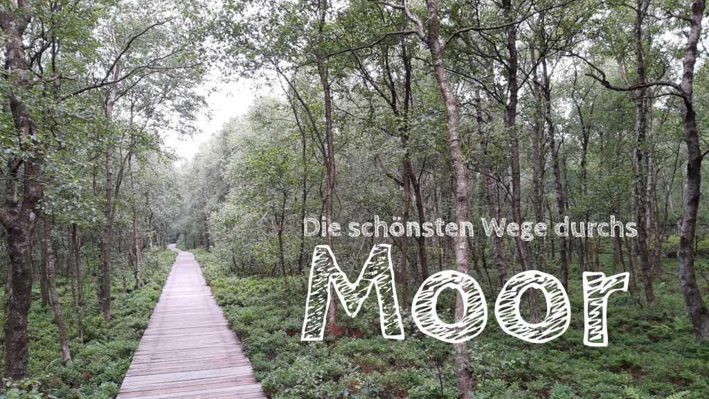 wandern im moor roundup moore in deutschland