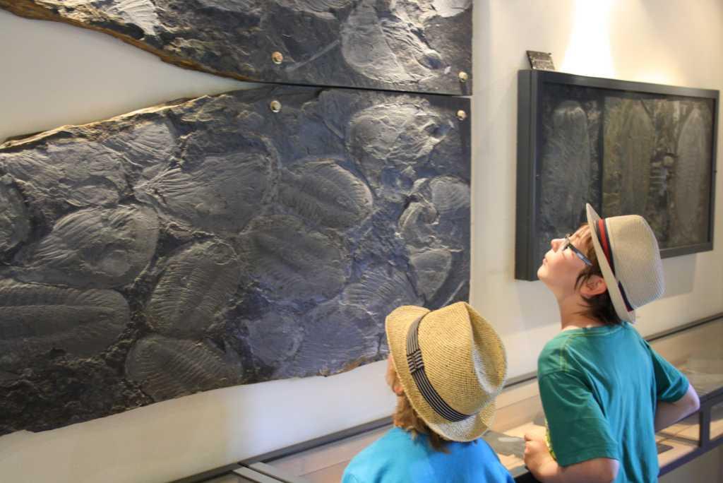 arouca museum versteinerungen