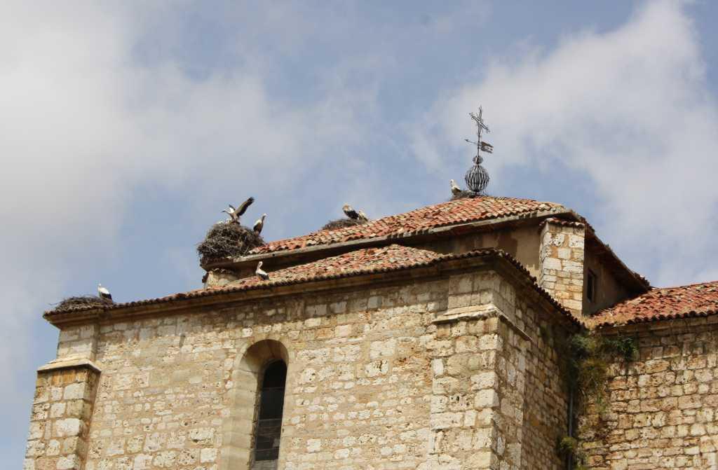 Augustinerkirche Duenas Störche