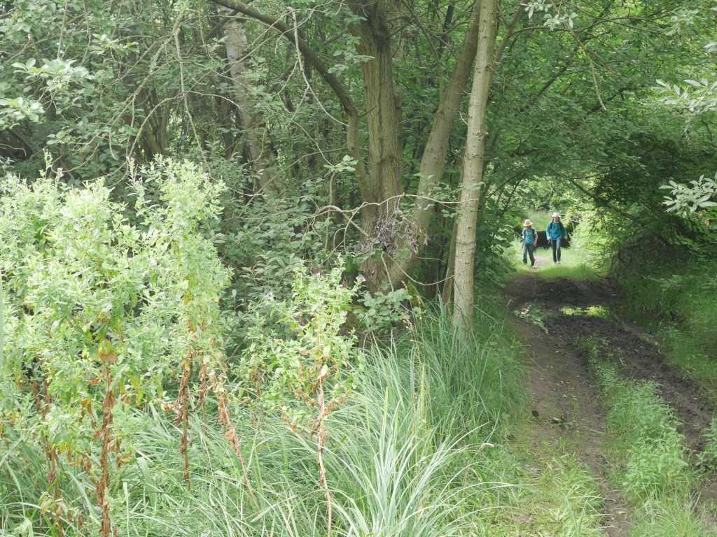 lenorenwald waldwanderung