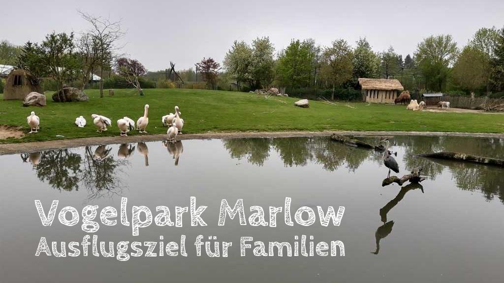 vogelpark marlow mit kleinkind